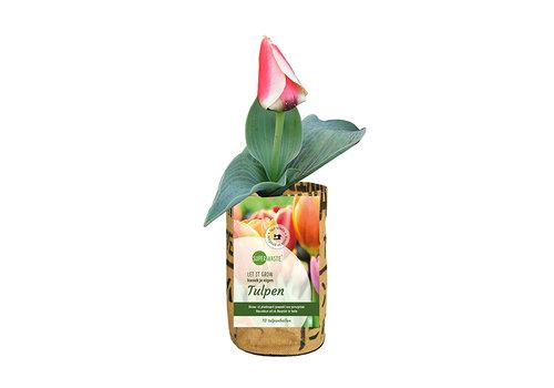 Superwaste Kweekpot tulpenbollen - small