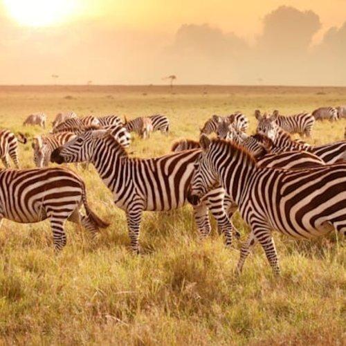 SCS Elegance of Africa 2021