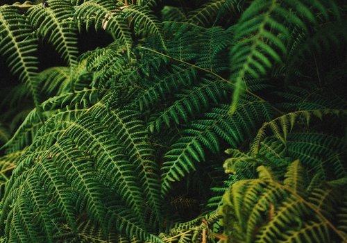 Jungle Beats