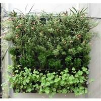 Plantenhanger  - Plantenbak - Plantenrek - Hangende tuin