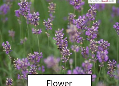 Bloemen geuren