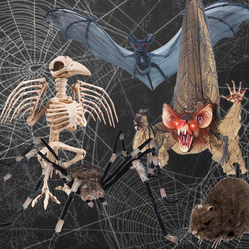 Spinnen & Griezel Dieren