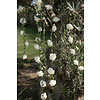 Roses garland White - ø 50 mm - 120 cm