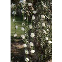 thumb-Roses garland White - ø 50 mm - 120 cm-1