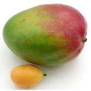 Paisley Paisley Bavarois Mango Abrikoos