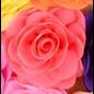 Snoepig Snoepig HaarKnipje Chiffon Bloemen - 15 Koraal