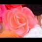 Snoepig Snoepig HaarKnipje Chiffon Bloemen - 19 Neon Roze