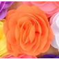 Snoepig Snoepig HaarKnipje Chiffon Bloemen - 20 Oranje