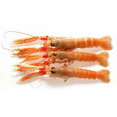 Norway lobster (800g)