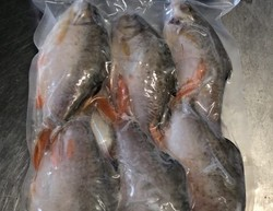 Red Tailed Tinfoil(1kg)