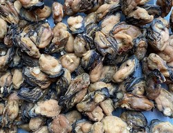 Dried Oysters(1kg)