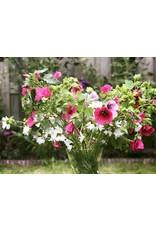 1x gratis bos bloemen plukken voor 1 kind bij Plukhoek Mookhoek