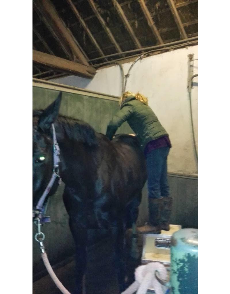 Tineke Booij Paardenmassage - Piershil