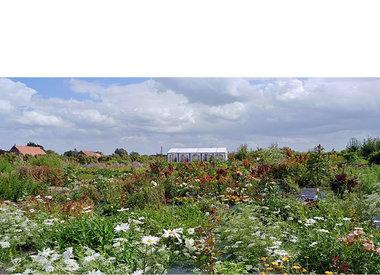 Plukhoek Mookhoek - 1x gratis bos bloemen plukken per kind t.w.v. €2,50,-