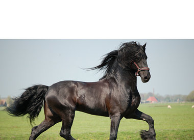 Tineke Booij - 1x gratis check-up van uw paard t.w.v. € 12,50,-