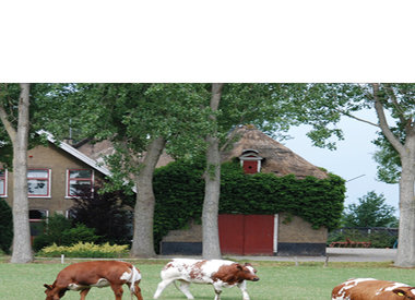 Weiderund - Bieflap pakje 250-300 gram €11,50 per kilo.