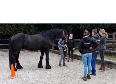 Paarden coaching Nieuwendijk - Schilderij bij start coaching
