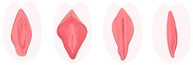 hoe ziet een vagina er uit