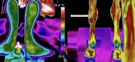 Total Horse Scan, paarden thermografie