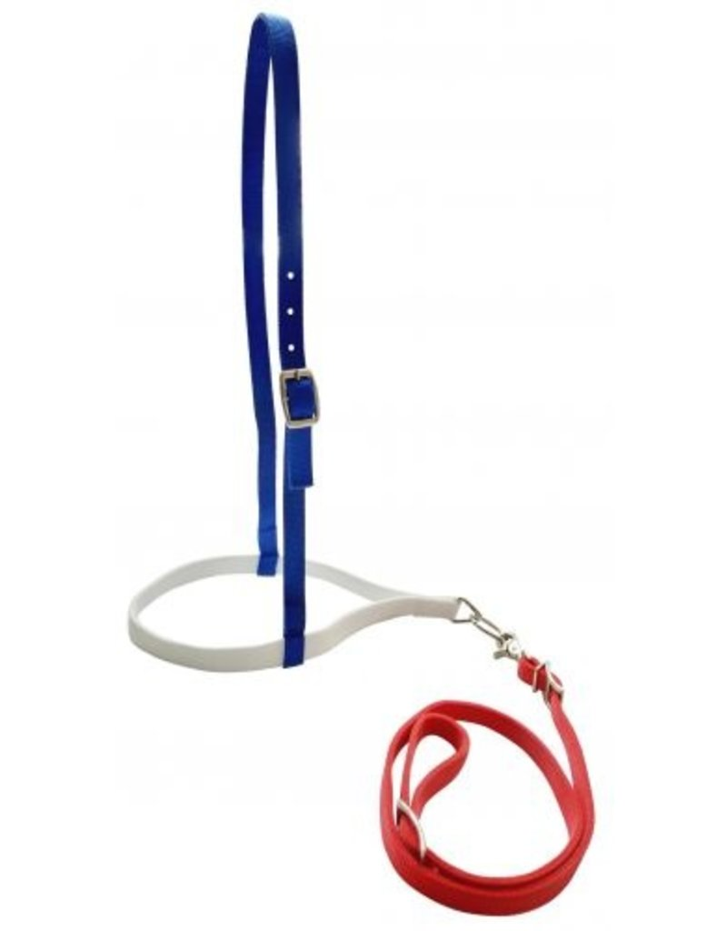 Showman ® Showman ® Red, White, and Blue nylon noseband and tiedown.
