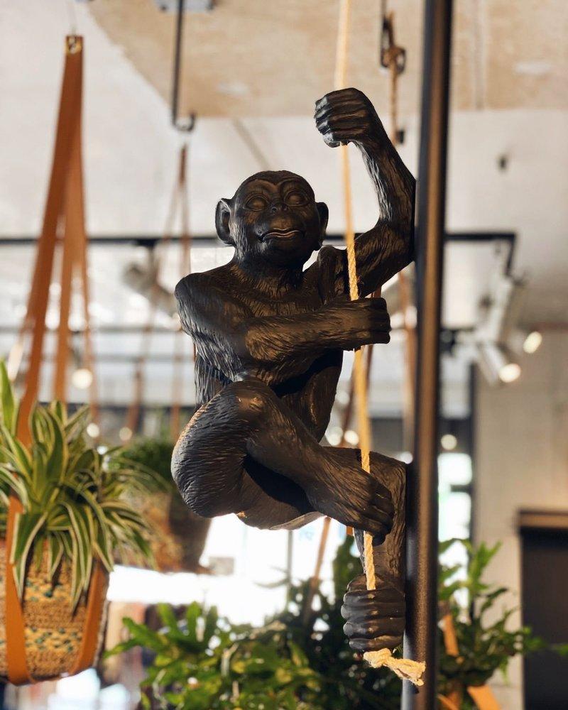 CK beelden Hang aap