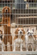Dierenopvang Amsterdam Jouw donatie voor onze dieren