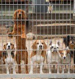 Dierenopvang Amsterdam Donatie voor onze dieren
