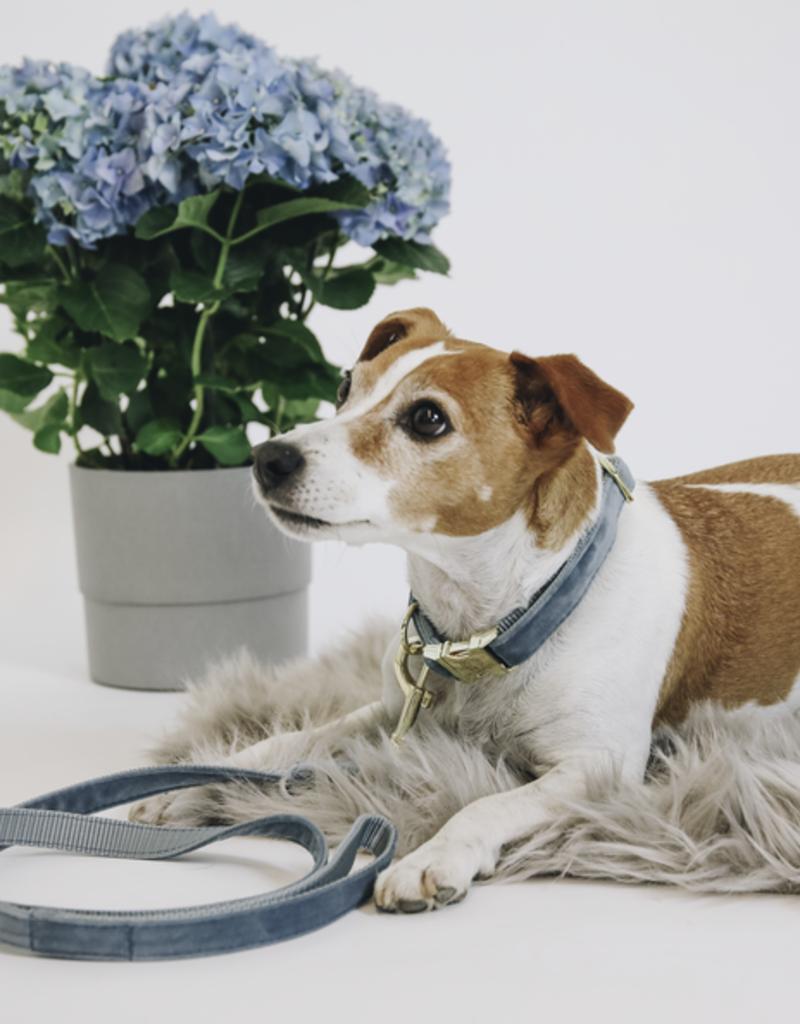 Hondenband velvet