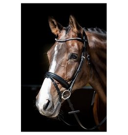 Harry Horse Hoofdstel Fiesta