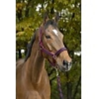 Equi-Theme halter with rope Satine
