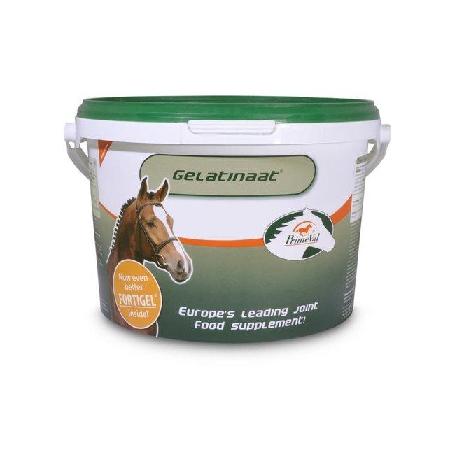 Gelatin Horse