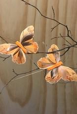 Vlindertjes - Oranje
