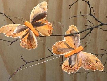 Vlindertjes -Oranje