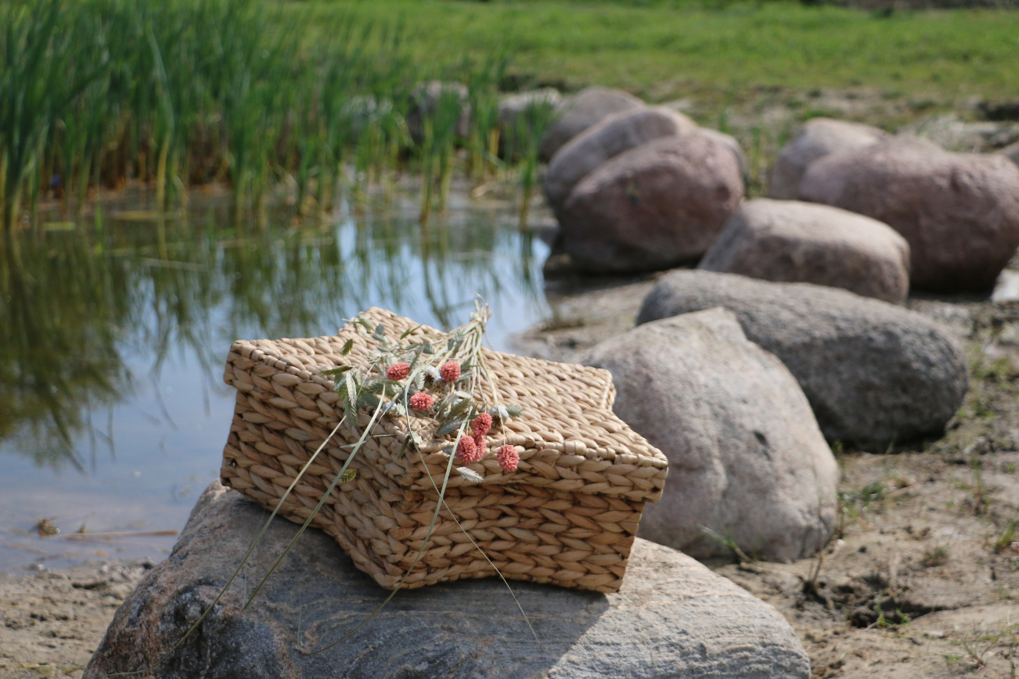 Ster waterhyacint Liguster