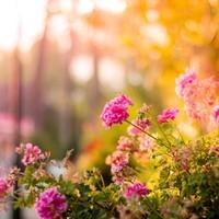 Lekker tuinieren? Dit tuingereedschap moet u aanschaffen!