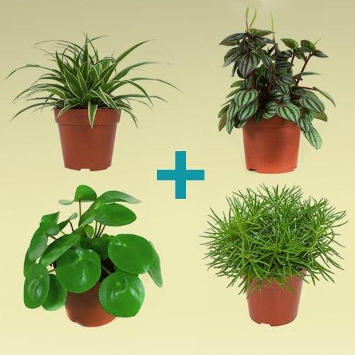Plant combinaties