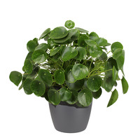 Pannenkoekenplant XL in ELHO sierpot (antraciet) (Pilea Peperomioides - 30x50 cm)