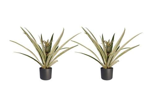 Decorum Duo 2 x Ananas Champaca met Elho B.for soft antracite (14x55 cm)