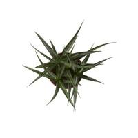 thumb-Sanseveria (Sanseveria Fernwood Punk - 12x30 cm)-3