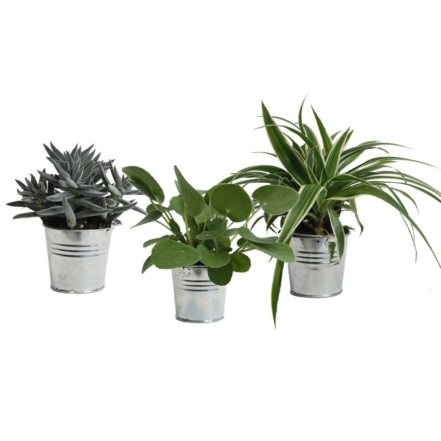 Mini Green | Trio Eden Collection ® in zomers zink (natural) (10x15 cm)-1