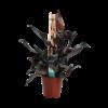 Decorum Philodendron Ruby  - Pyramide (DECORUM-RB19 - 19x65 cm)