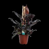 thumb-Decorum Philodendron Ruby  - Pyramide (DECORUM-RB19 - 19x65 cm)-1