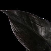thumb-Decorum Philodendron Ruby  - Pyramide (DECORUM-RB19 - 19x65 cm)-2