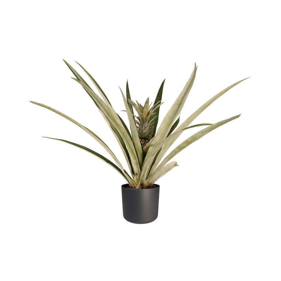 Decorum Ananas Champaca met Elho B.for soft antracite (14x55 cm)-1