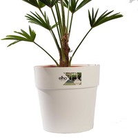 thumb-WAGNER PALM MET POT (trachycarpus wagneriana - 26x75 cm)-2
