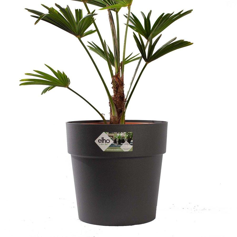 Trachycarpus Wagneriana met pot (26x75 cm)-2