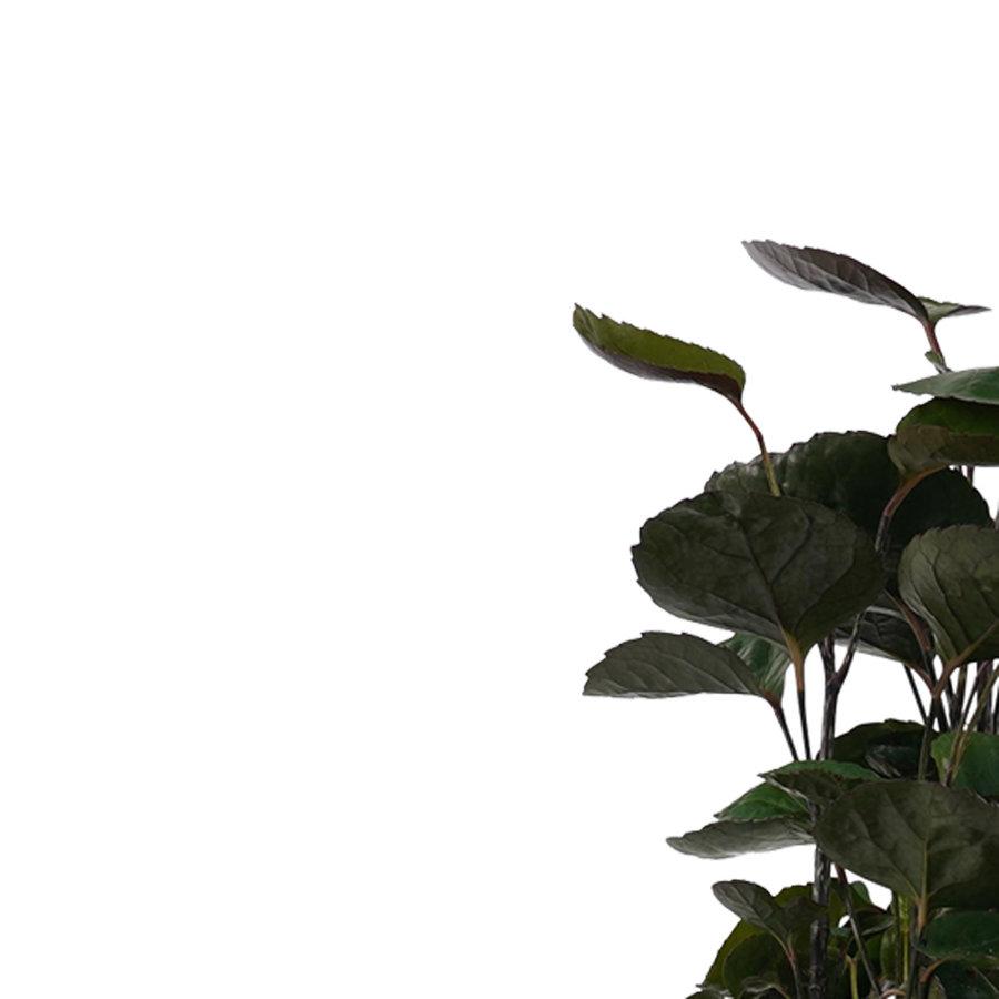 Decorum Polyscias Fabian vertakt (205096 - 17x50 cm)-2
