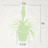 thumb-Ananas Corona single (Cor01 - 12x35 cm)-6
