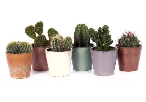 Cactus mix in Avignon sierpot (SP254 - 9x18 cm)