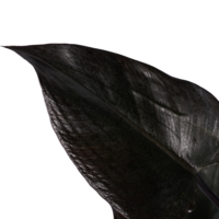 thumb-Decorum Philodendron Ruby  - Pyramide in ELHO Round (antraciet) (DECORUM-RB19 - 20x70 cm)-2